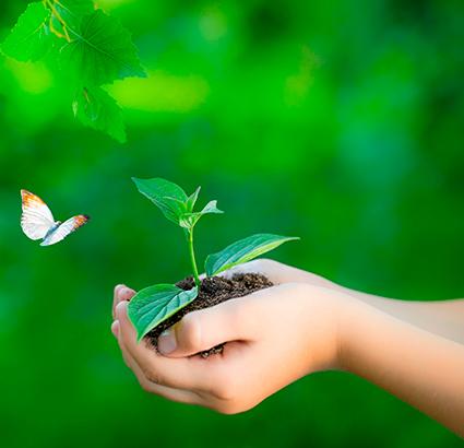 politica-de-meio-ambiente